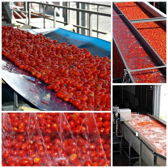 lavaggio del pomodoro