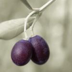 L'olio extra vergine di oliva nella (mia) dieta